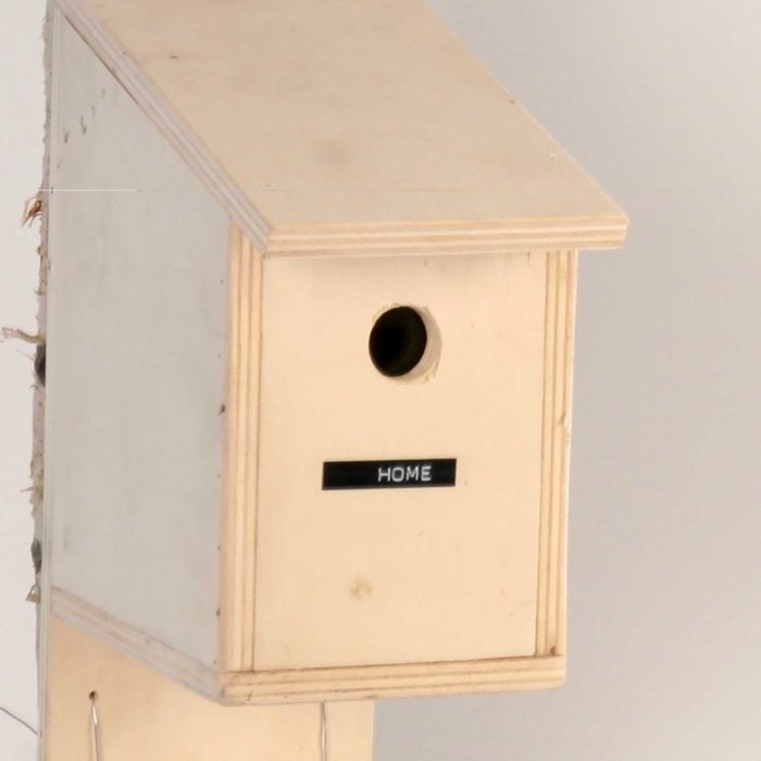 Bird House Prank