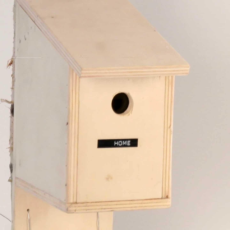 Bird House Prank